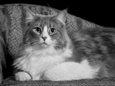 'Hello My Kitty'