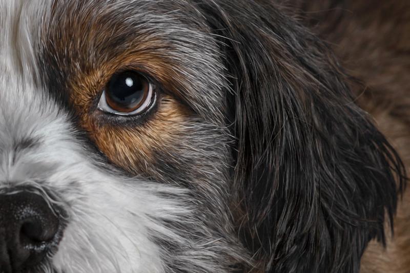 Classically Creative Pet Portraiture