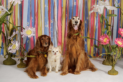 The Parisi Family