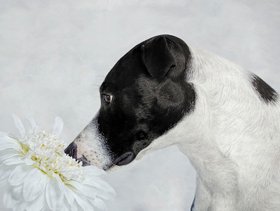 'Stop And Smell The Flowers'