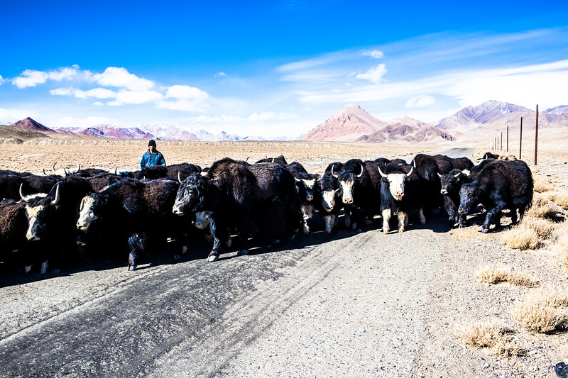 Watch out the yaks, Tajikistan