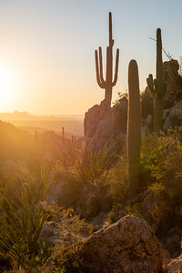 The Sonoran Desert is contains a rich diversity of life.
