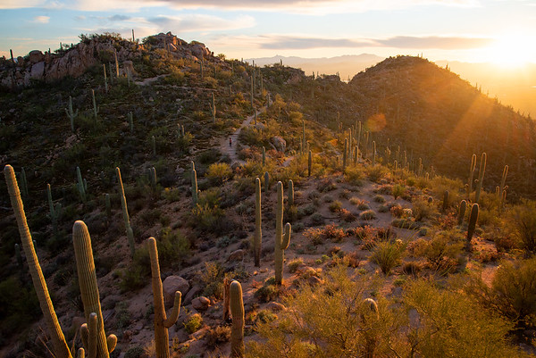 Hiking through a Saguaro cactus forest in Saguaro National Park in Arizona.
