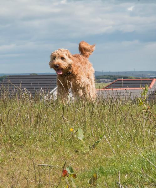 Dogs having fun 2.jpg