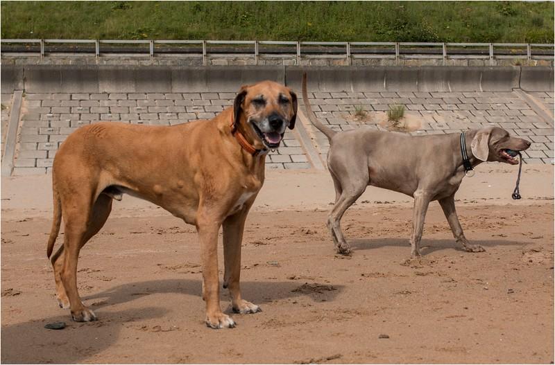 Dogs Having fun 3.jpg