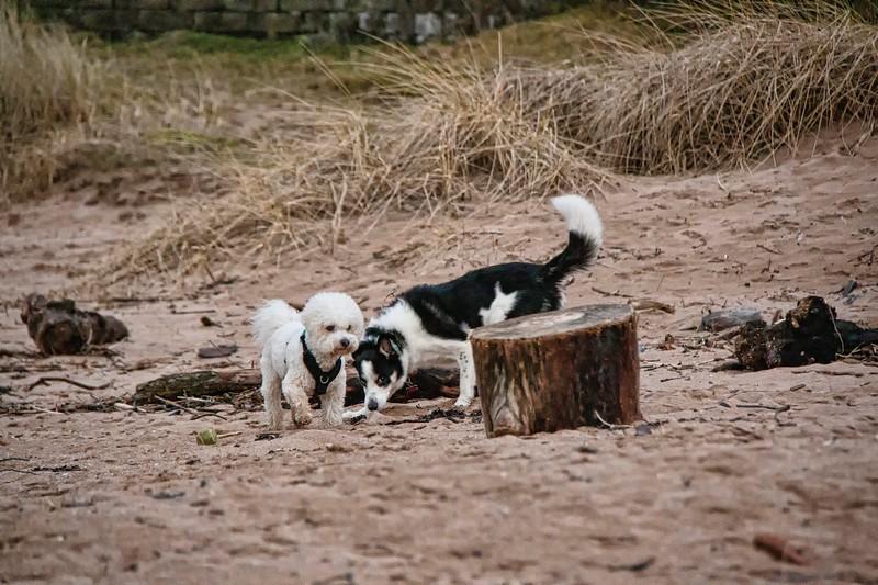 Two dogs having fun