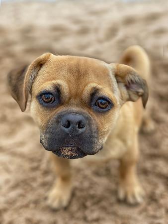 Odie the puppy