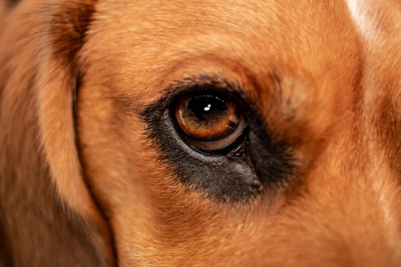 Ozzies Eye.jpg