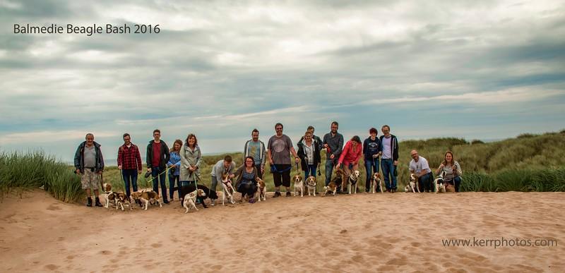 Balmedie Beagle Bash 2016.jpg