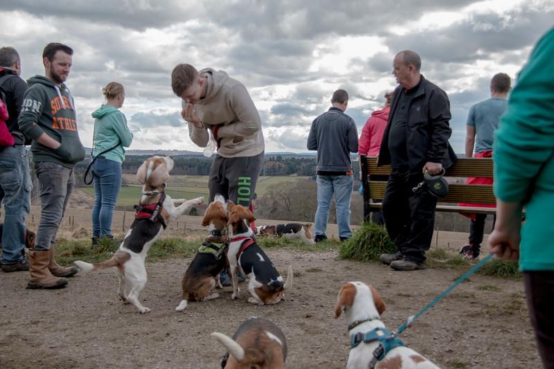 Beagles 1.jpg