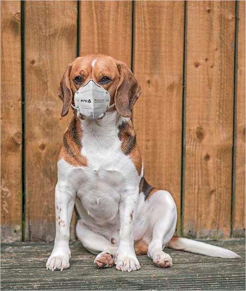 Ozzie with a mask.jpg