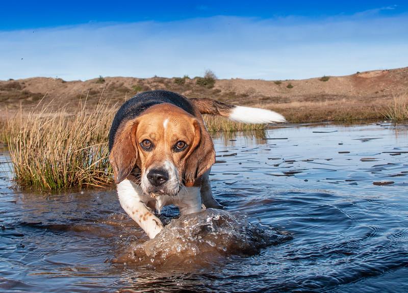 Ozzie in the ice water.jpg