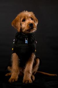 Dog Photobooth Dec2-0013