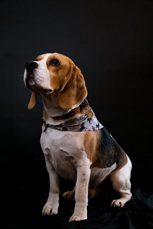 Dog Photobooth Dec2-0019