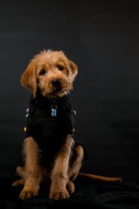 Dog Photobooth Dec2-0014