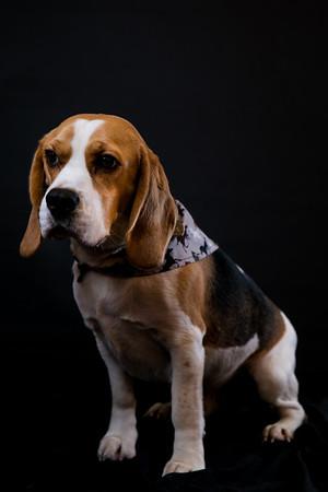 Dog Photobooth Dec2-0021