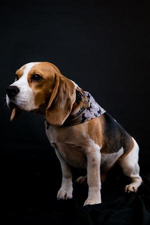 Dog Photobooth Dec2-0020
