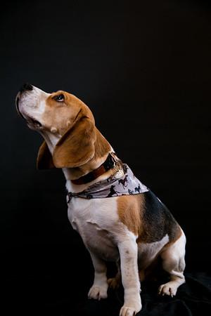 Dog Photobooth Dec2-0017