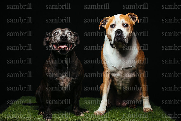 DOGS3345