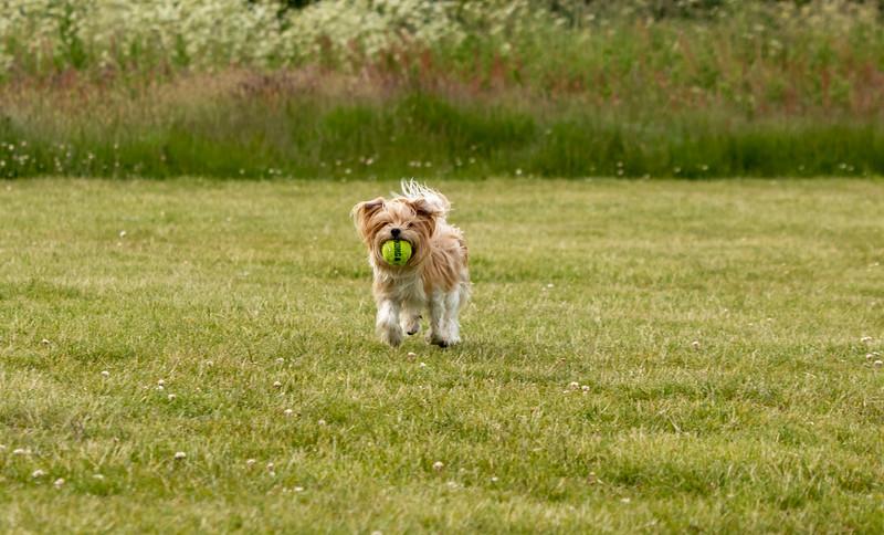 Dog 3.jpg