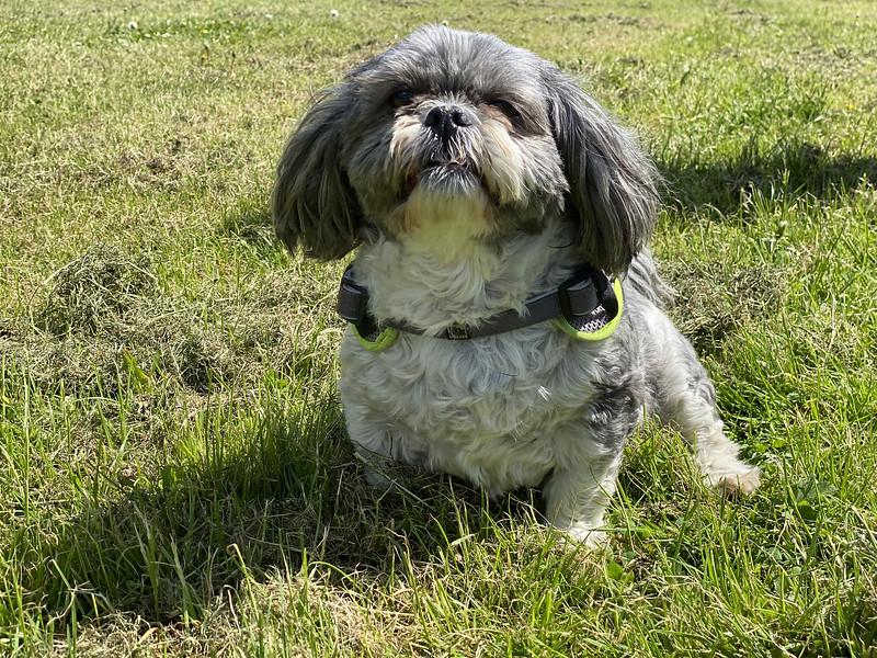 Suzie the dog at Grandholm.jpg