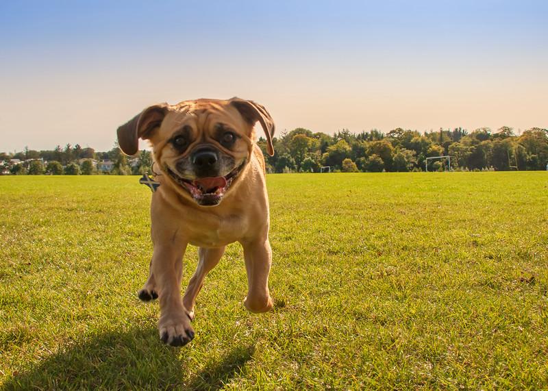 Dogs having fun 3 at Hazelhead Park.jpg