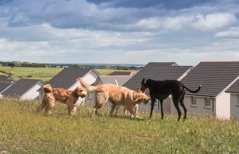 Dogs having fun 1.jpg