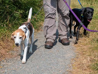 Dogs in the Scotstown Moor