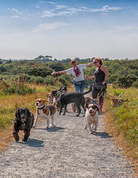 Female dog walkers.jpg