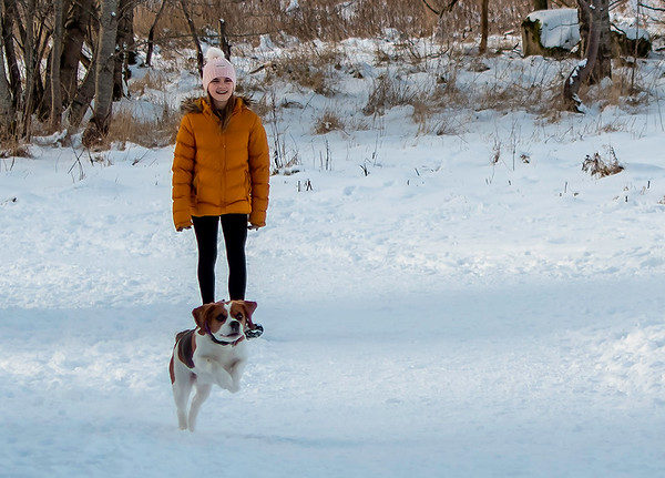 Sansa the Beagle