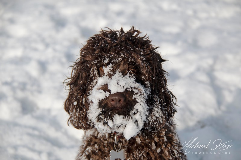 Who through that snowball