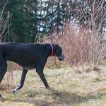 boneheads Pet Services' photo