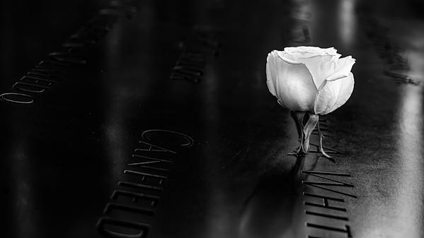 Lone Rose II