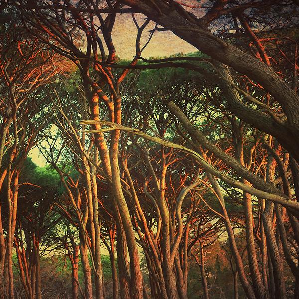 Tangled Woods