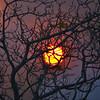 Bush Fireball Sunset