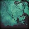 Evening Songbird
