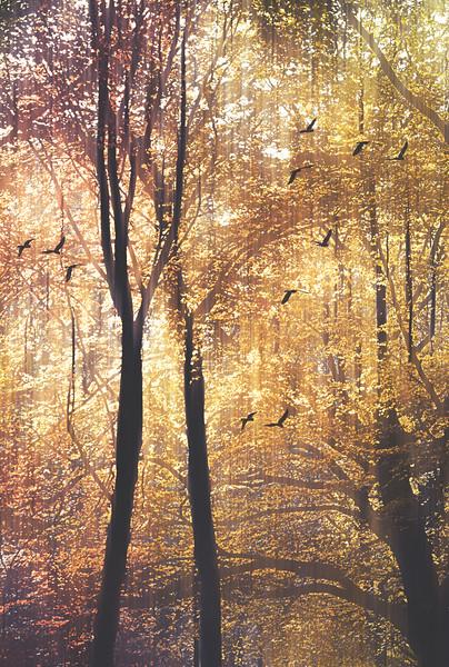 Flight Through Golden Grove