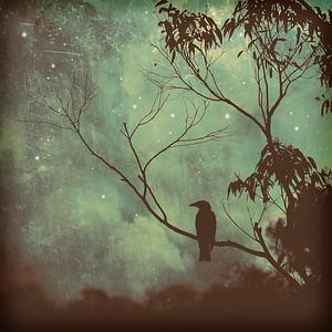 Watching Night Fall