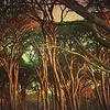 Through Tangled Woods