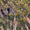 Great Blue Heron's Escape ~ Pointe Mouilee, Lake Erie
