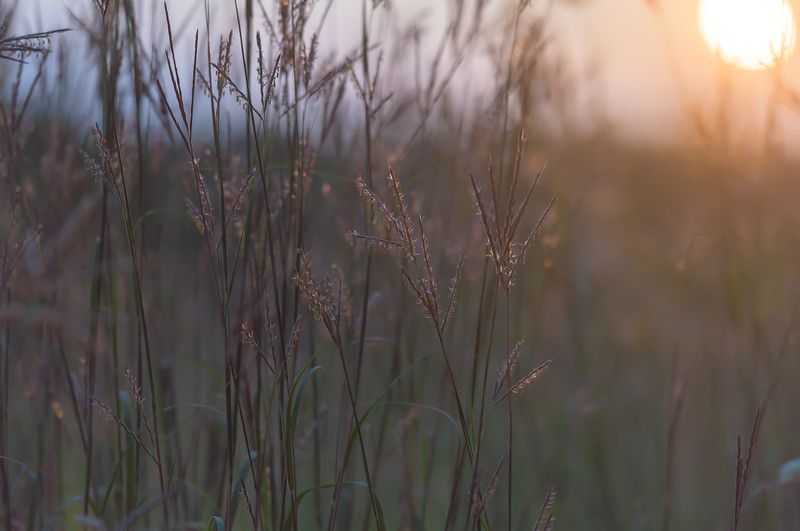 Prairie Morning ~ Huron River and Watershed
