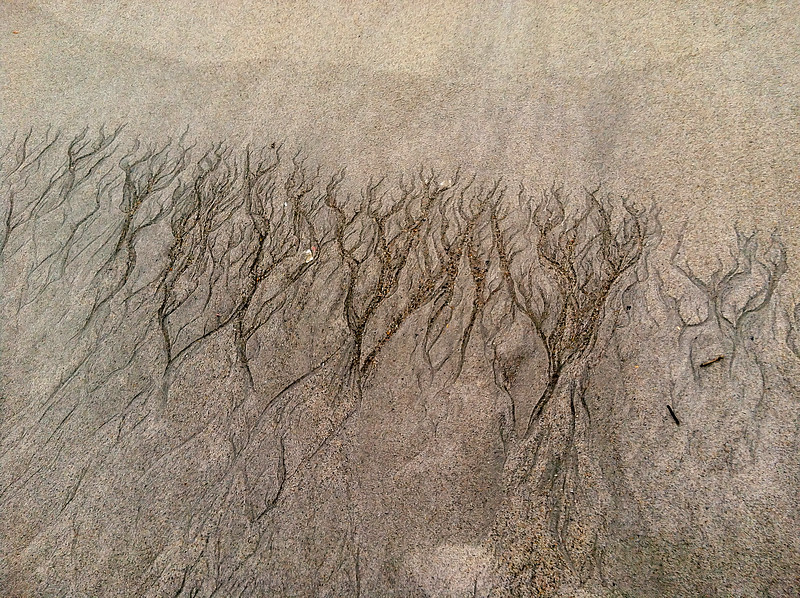 Natural Texture Etchings by the Sea ~ Southern Outer Banks