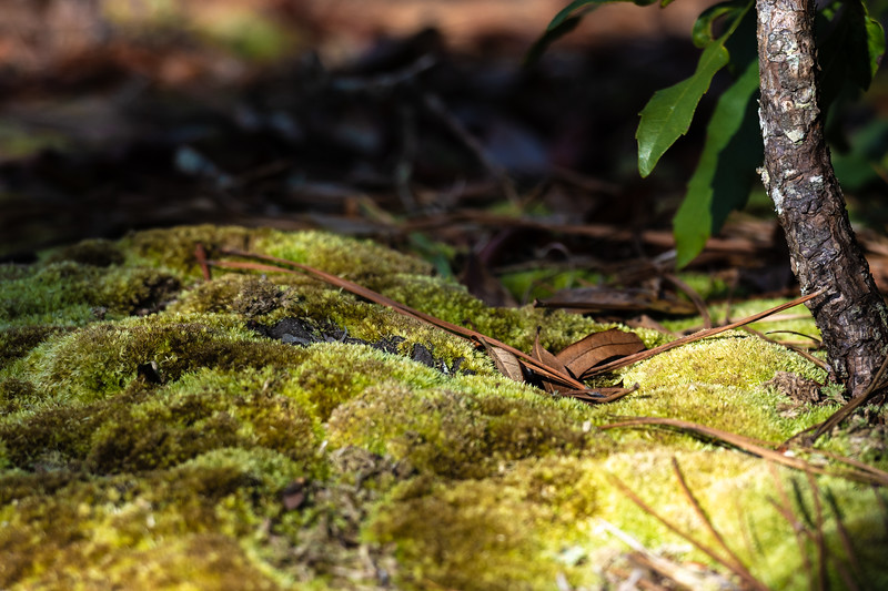Forest Floor ~ Southern Outer Banks, North Carolina