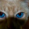Soul of a Cat