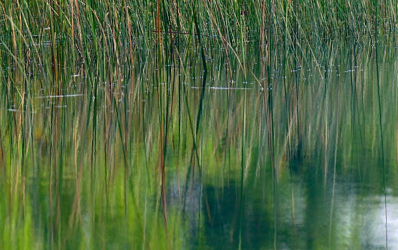 more reeds ~ and reflections ~ Lake Huron