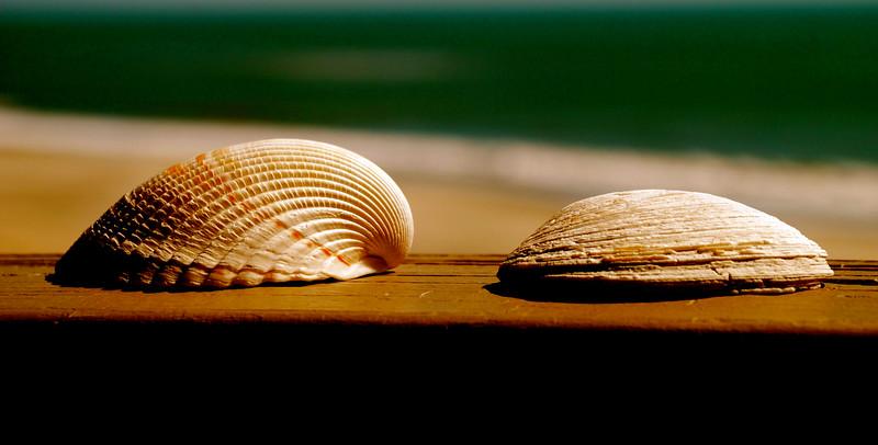 seashells by the seashore ~ Southern Outer Banks
