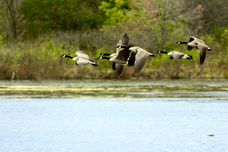 on the wing ~ Huron River Watershed, Michigan