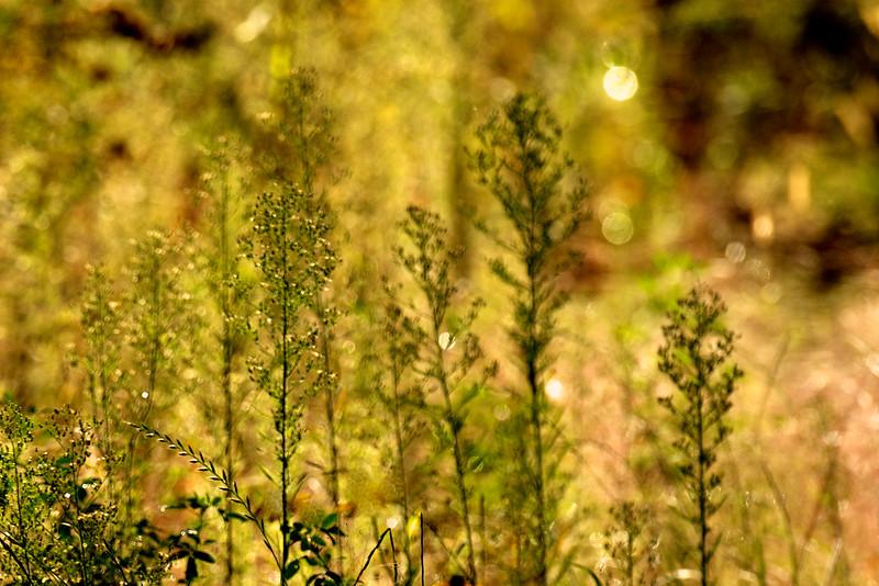 sweet autumn light ~ Huron River Watershed, Michigan
