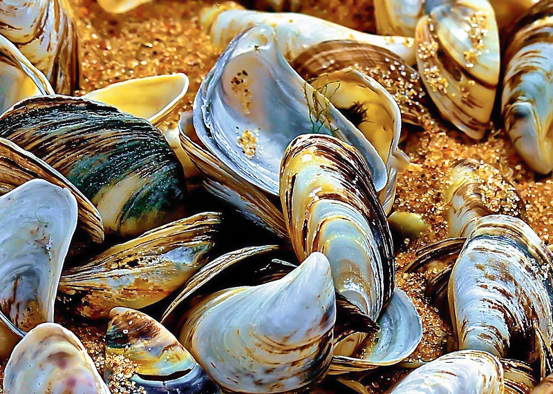 Shells ~ Great Lakes and Watersheds