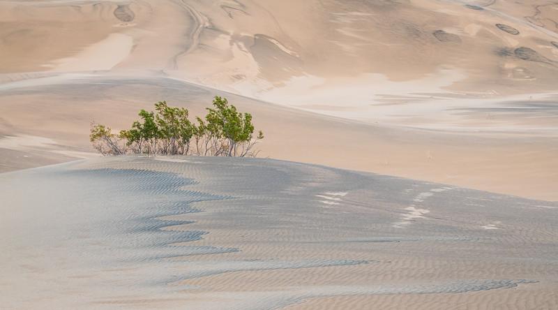 A-LN_Fritz-Rumpf_Desert-Sentinels